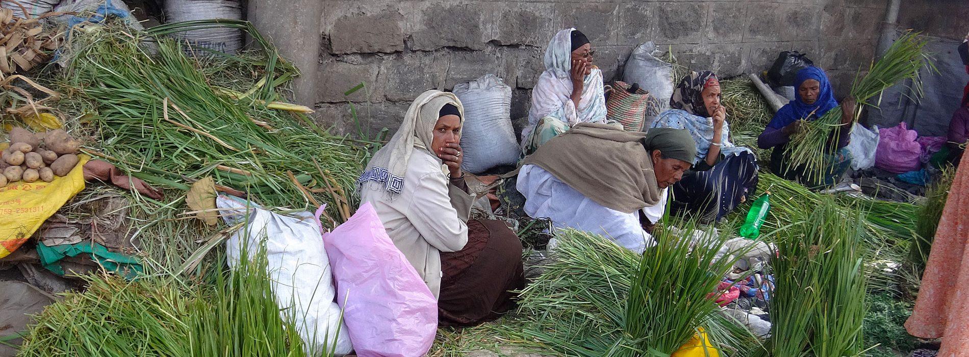 Addis-Ladies-header